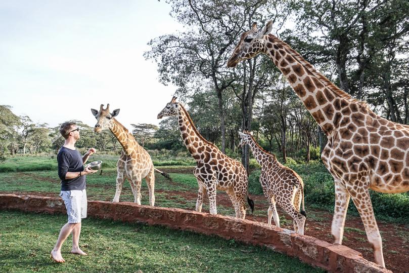Berni feeding Giraffes