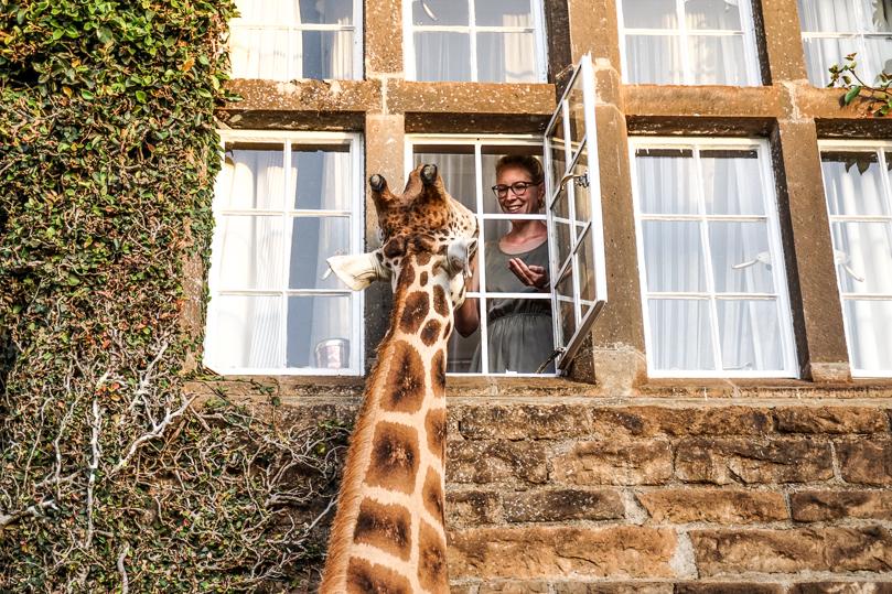 Giraffe Jocks Room Julia