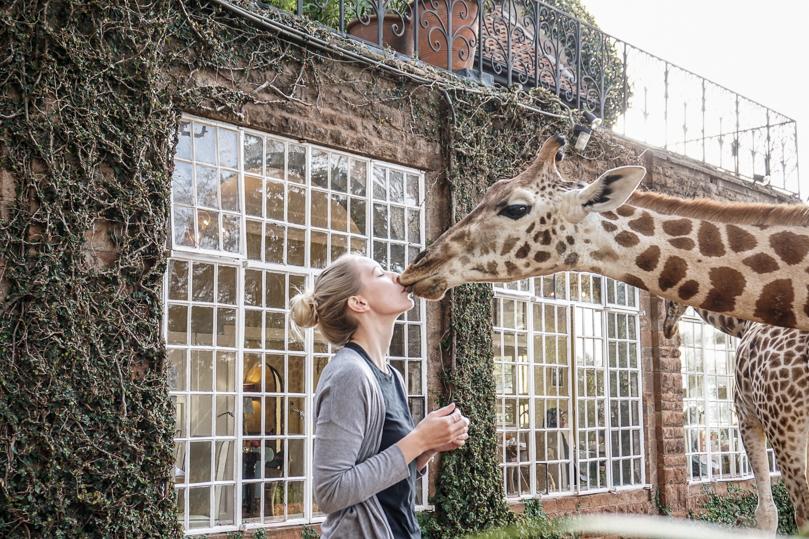 Giraffe Kissing
