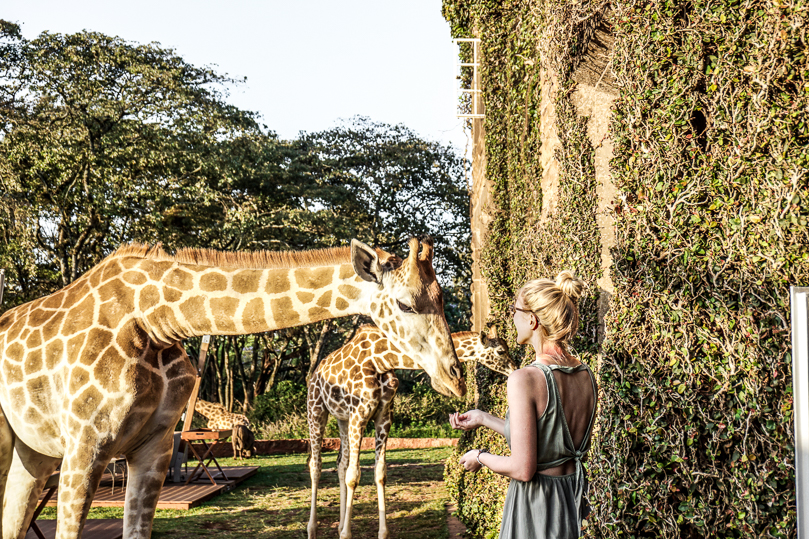 Giraffe Feeding Door