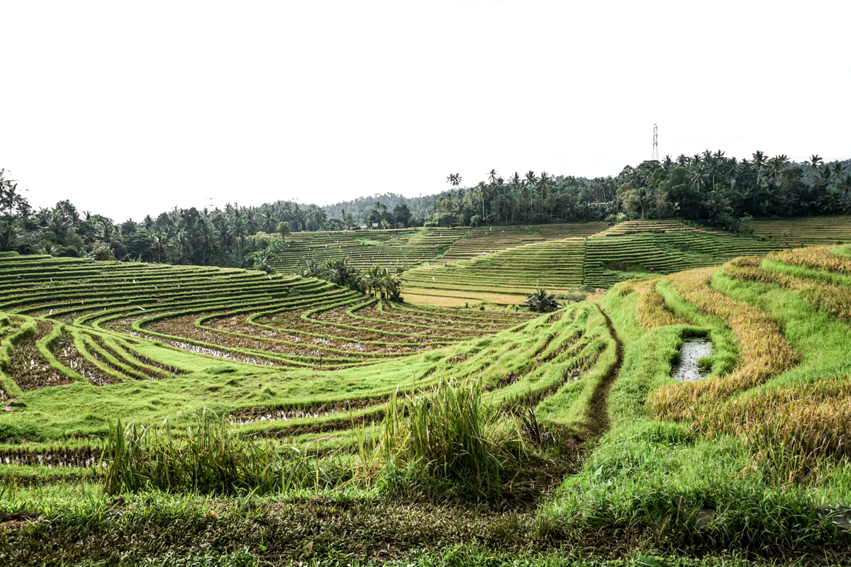 Belimbing Rice Terraces