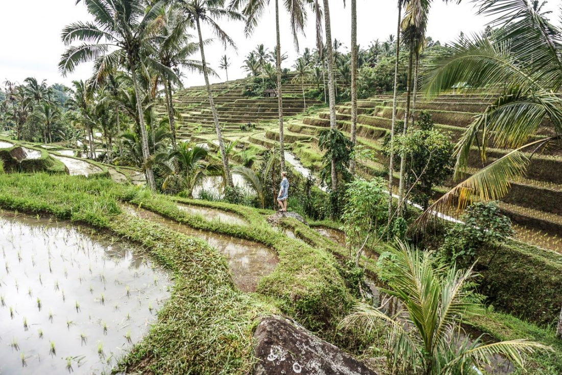 The 3 Most Magical Rice Terraces In Bali Why You Have To Visit