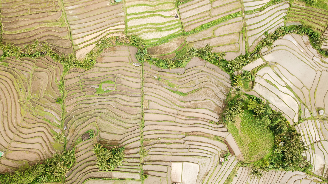 Jatiluwih Rice Terraces Bird View