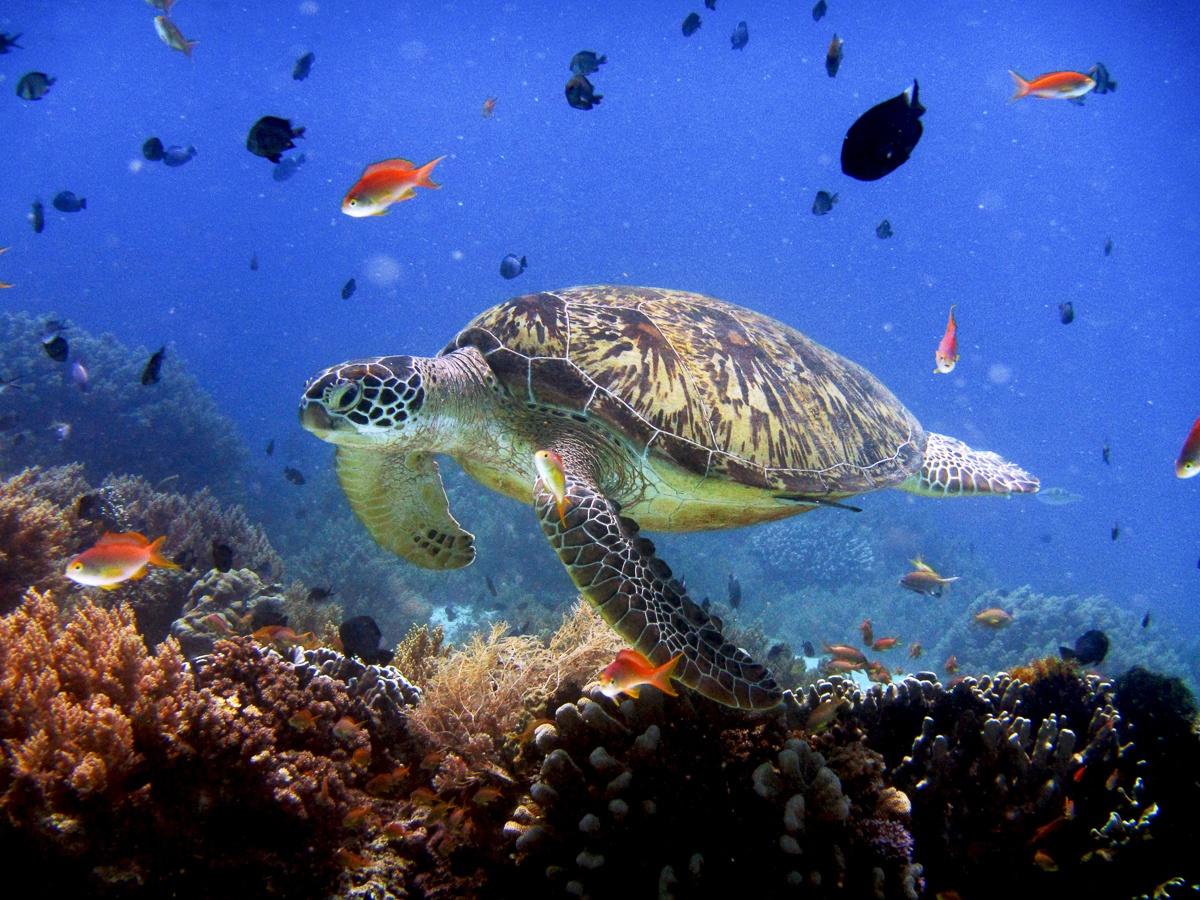 Turtle Balicasag