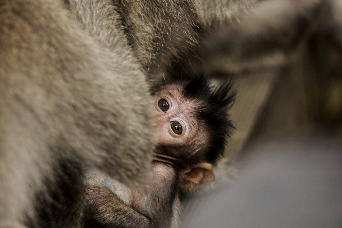 Monkey Baby Monkey Forest