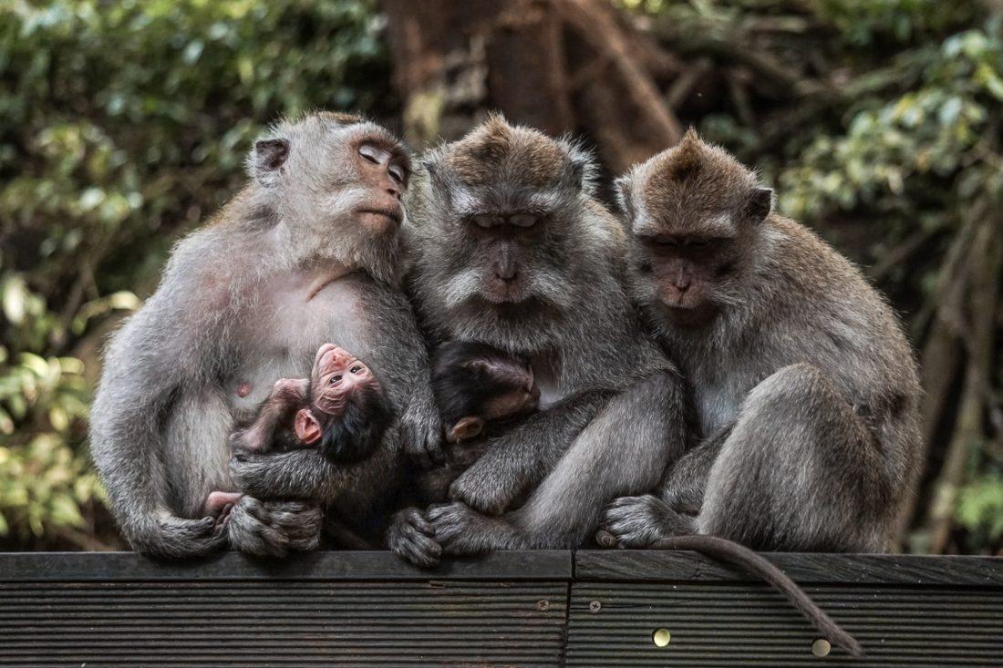 Monkey Forest Bali Ubud