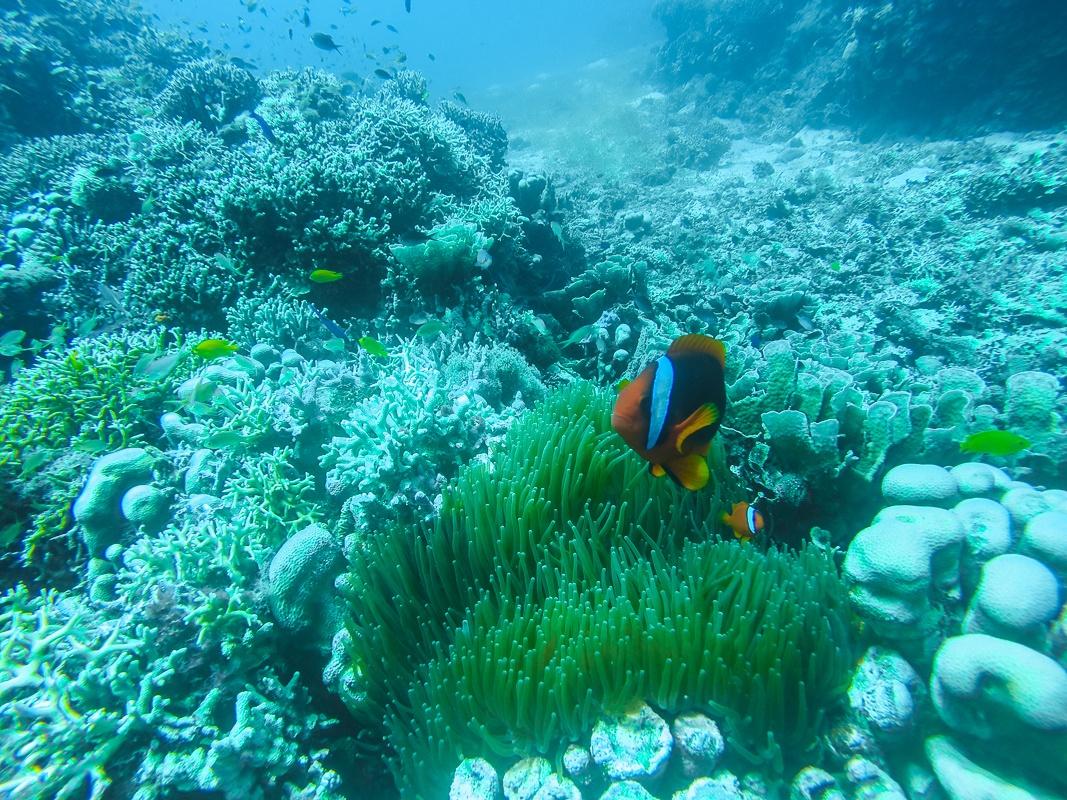 Diving Marine Life Malapascua Island