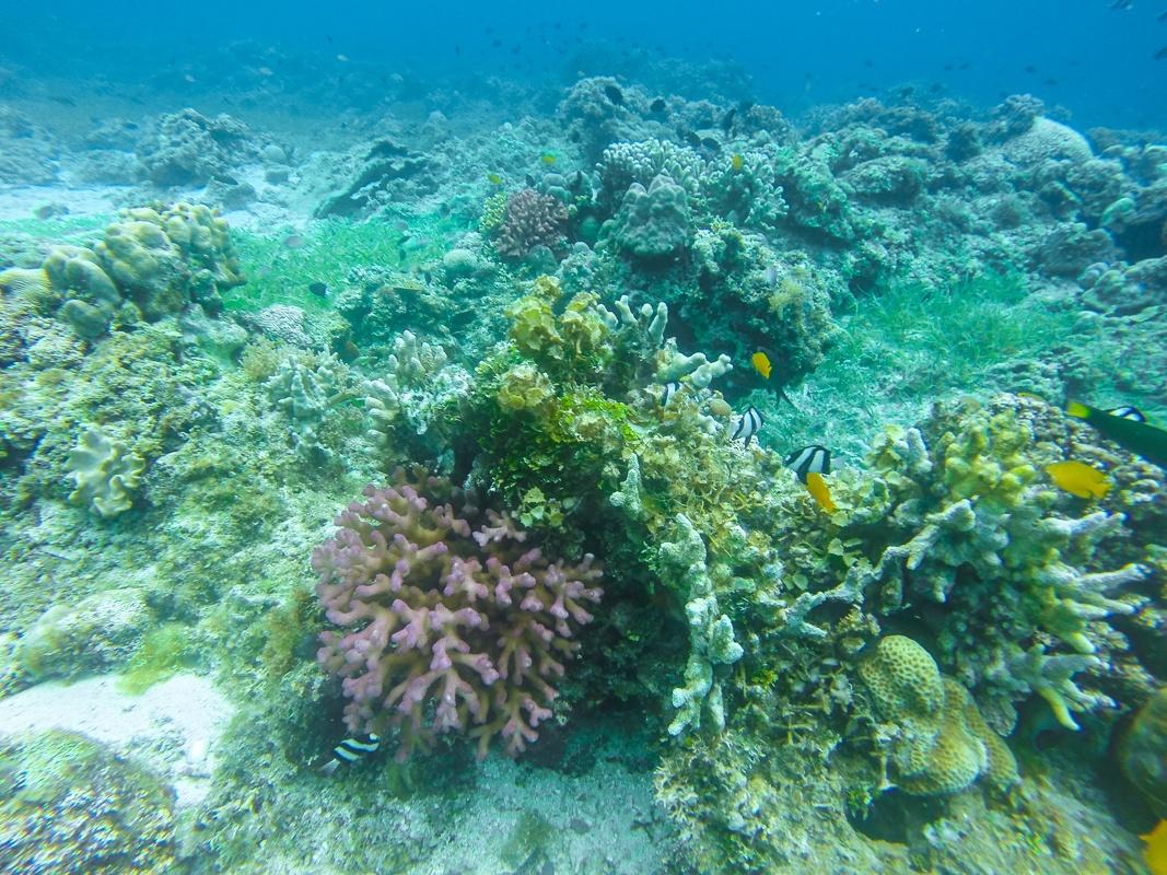 Marine Life Malapascua Island
