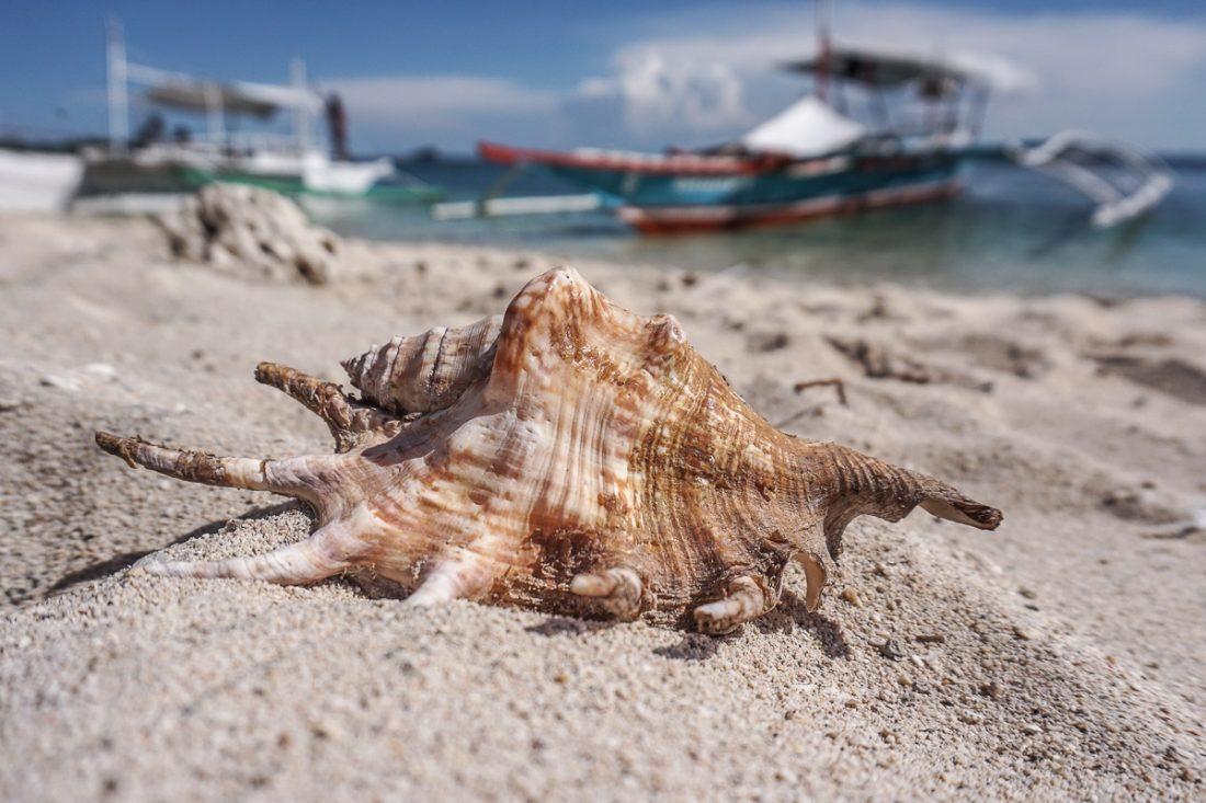 Shell Malapascua Island