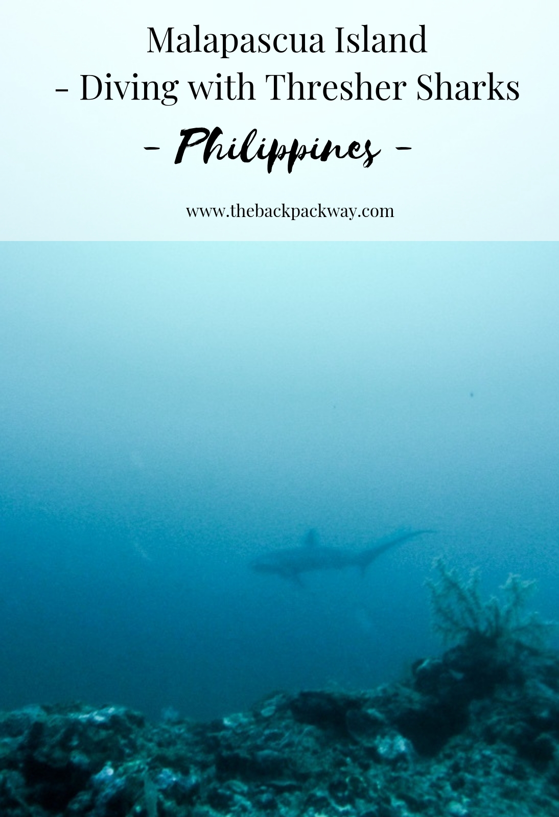 Malapascua Island Thresher Sharks