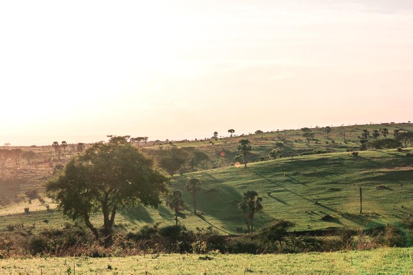 sunrise-big-five-safari-uganda