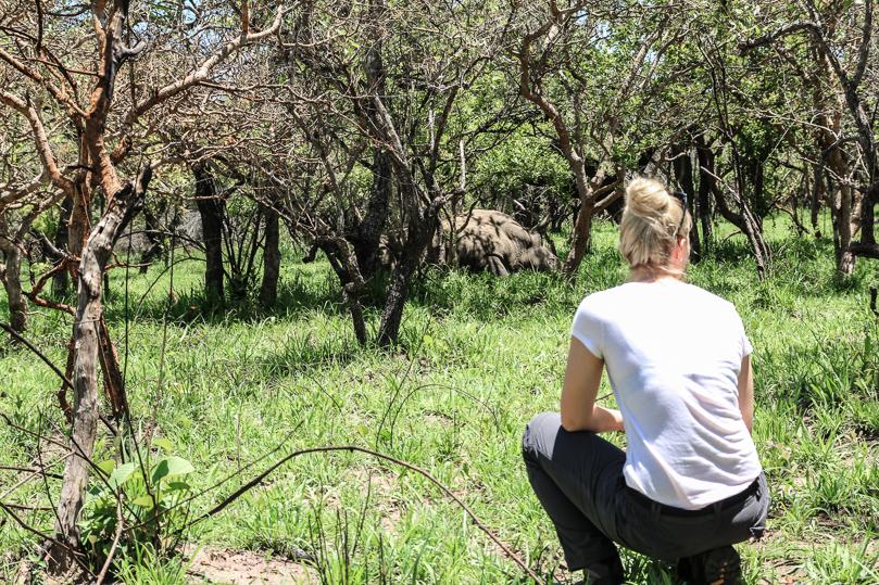 rhino-resting-big-five-safari-uganda